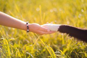 Hand und Pfote Hund Tierkommunikation
