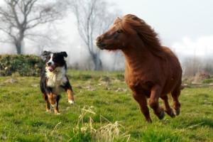 Tierkommunikation Energiearbeit Tiere Pferde und Hunde