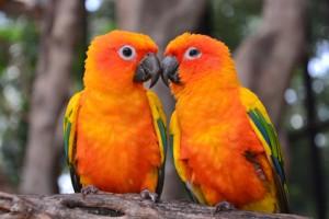Tiergespräche Beispiele Papageienpärchen
