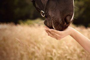 Pferdenase Hand Pferdeliebe Tierkommunikation