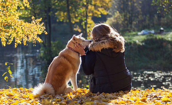 tierkommunikation lernen
